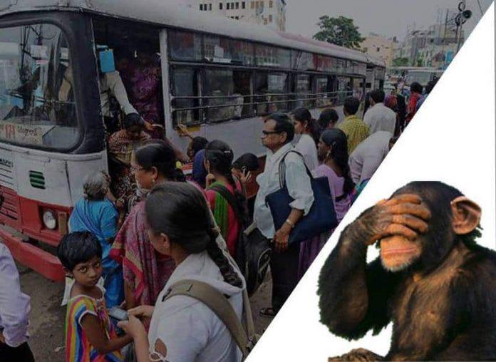Monkey in Bareilly
