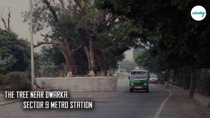 The Tree Near Dwarka, Sector 9 Metro Station