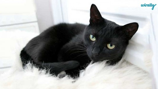 Decoding Indian Superstitions-Black cat
