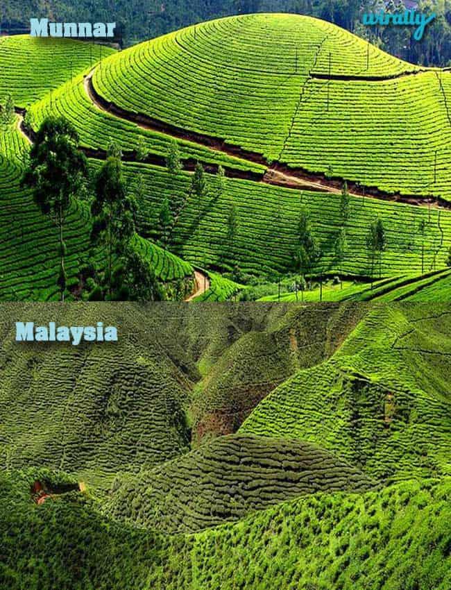 Munnar-Malaysia