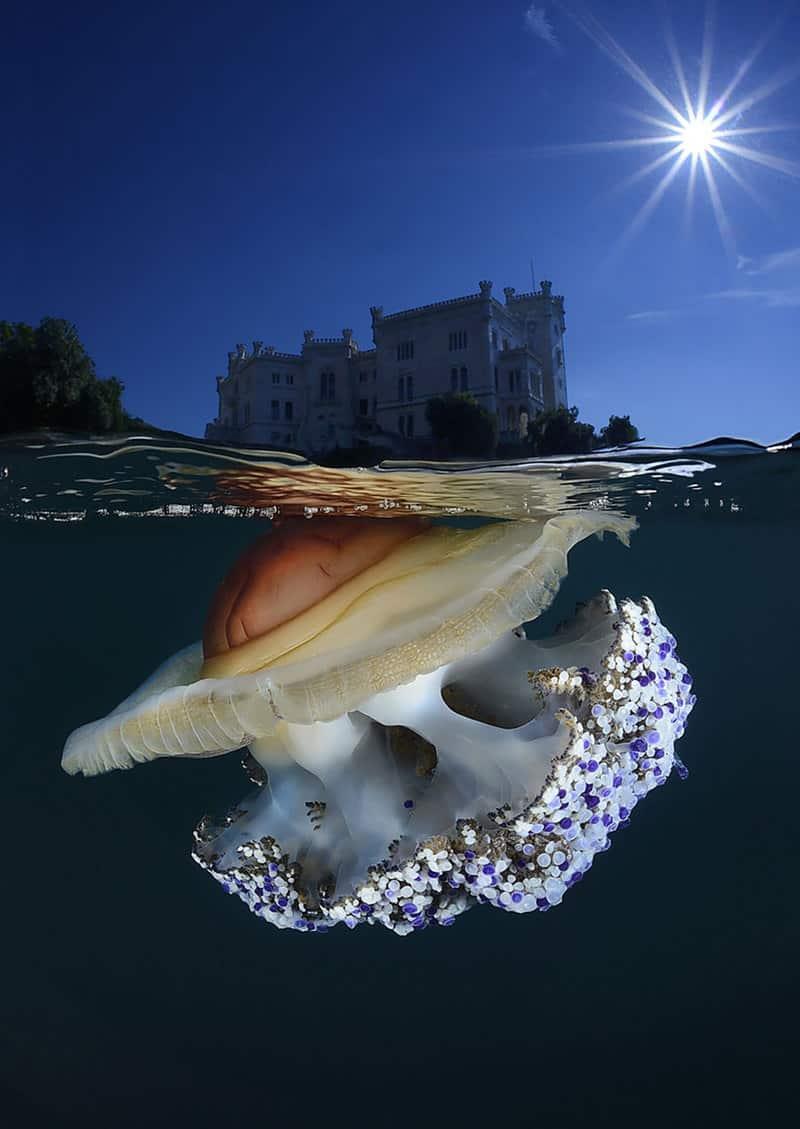 Egg Jelly fish