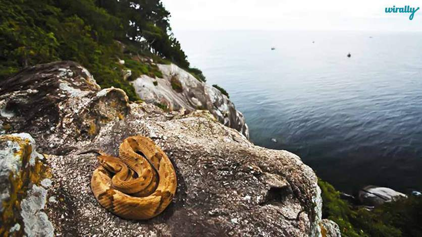 Snake Island, Off Shore Sao Paolo, Brazil-Places not advised to visit