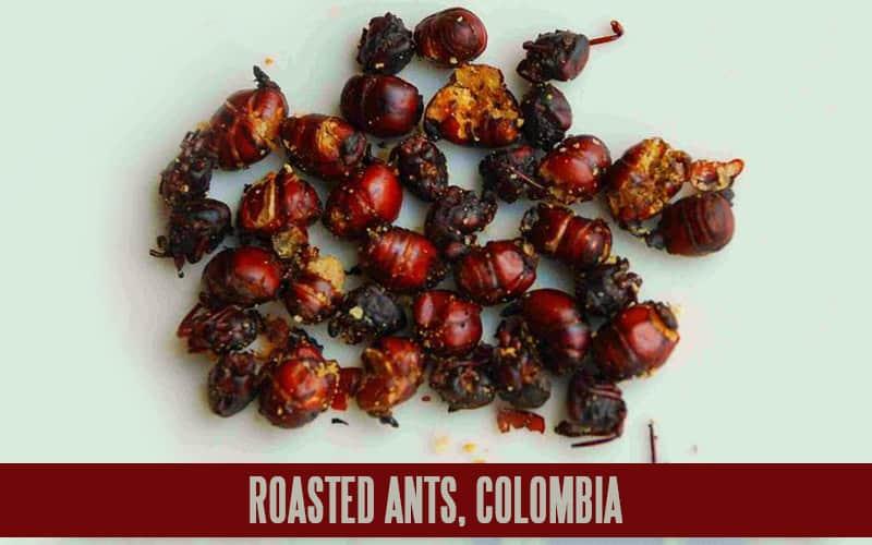ROASTED ANTS