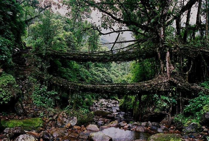 living-root-bridge-1