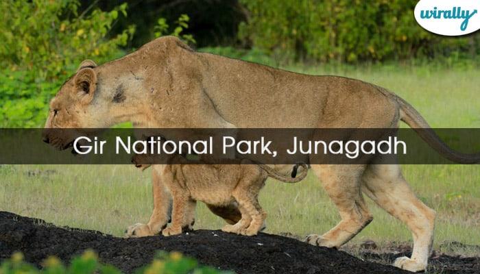 Gir National Park, Junagadh