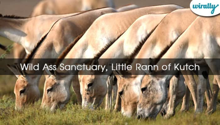 Wild Ass Sanctuary, Little Rann of Kutch