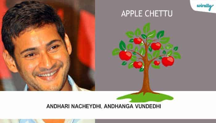 Apple chettu