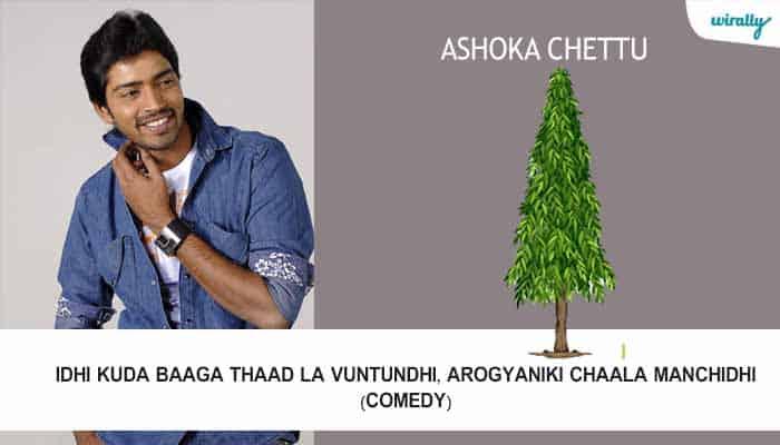 Ashoka Chettu