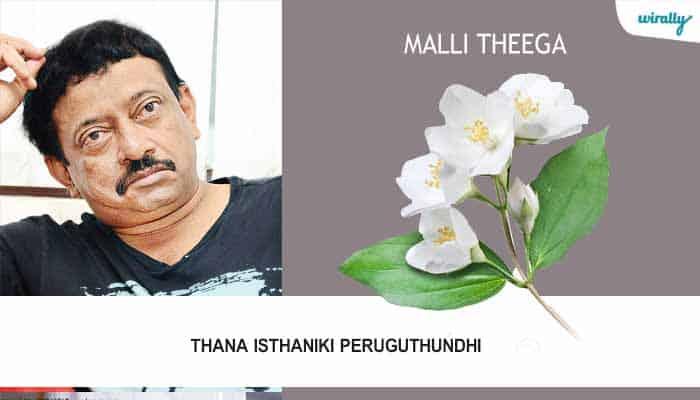 Malli theega
