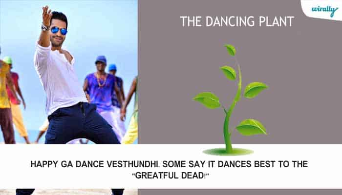 The Dancing Plant