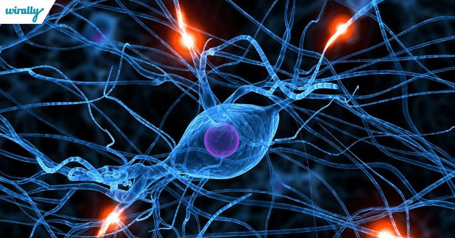 brain-cells