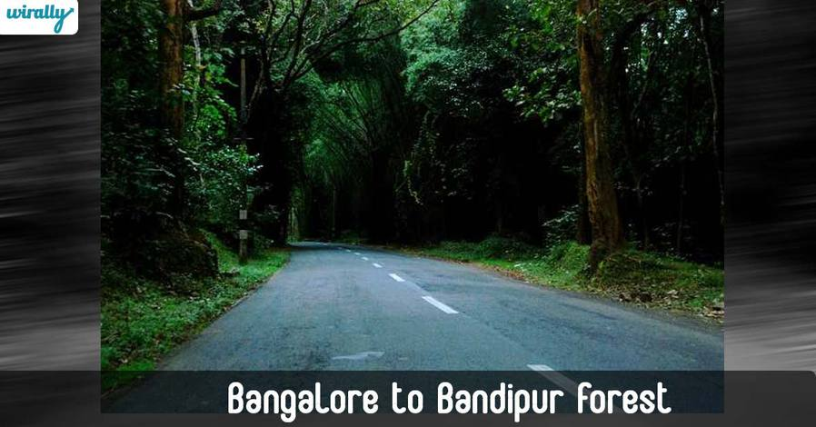 Bangalore-to-Bandipur-Forest