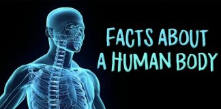Human body, facts about a Human Body,