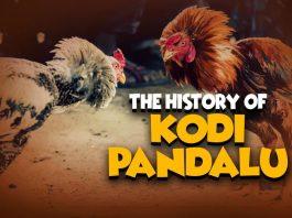 Kodi Pandalu