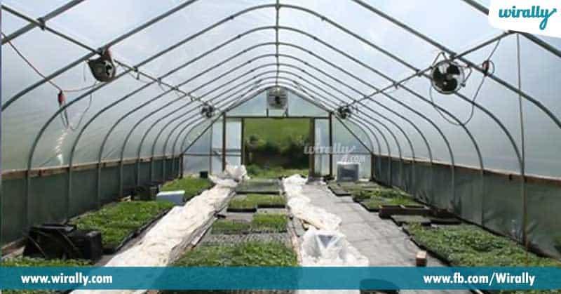 Green-House-Farming