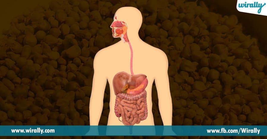 1 Benefits of eating Jonnalu or Jowar