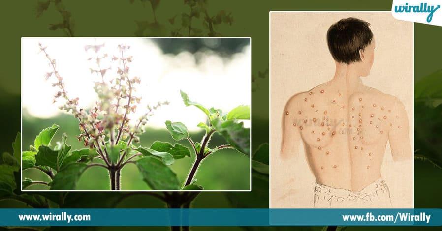 2.Why do we worship the Tulasi Plant