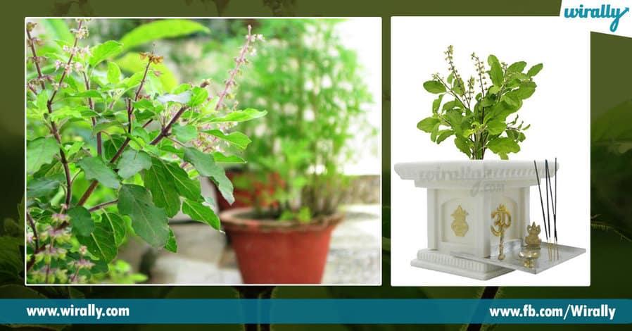 4.Why do we worship the Tulasi Plant