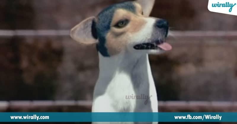 4. Kotigadu (Dog) in Godavari