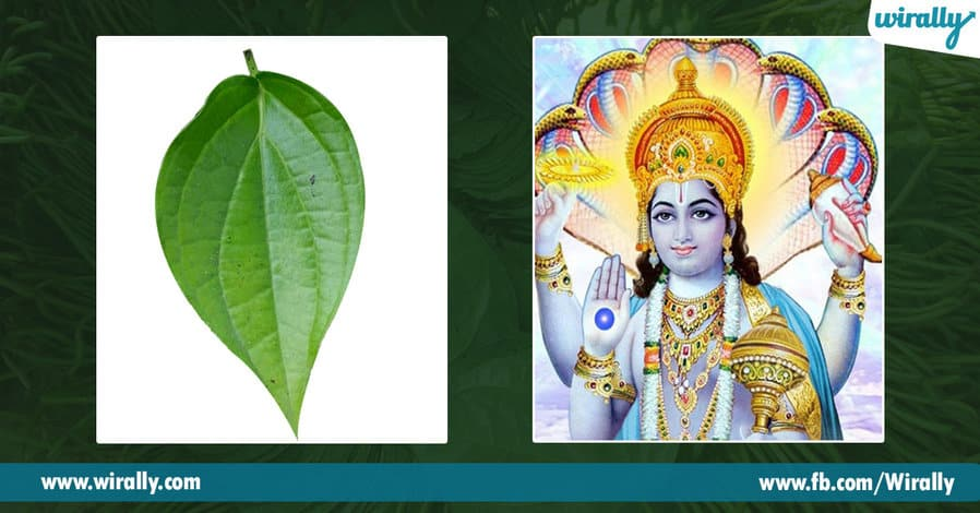 05 Importance of Betel Leaf