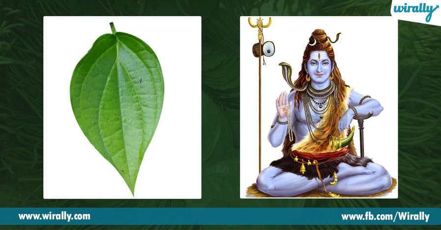 06 Importance of Betel Leaf