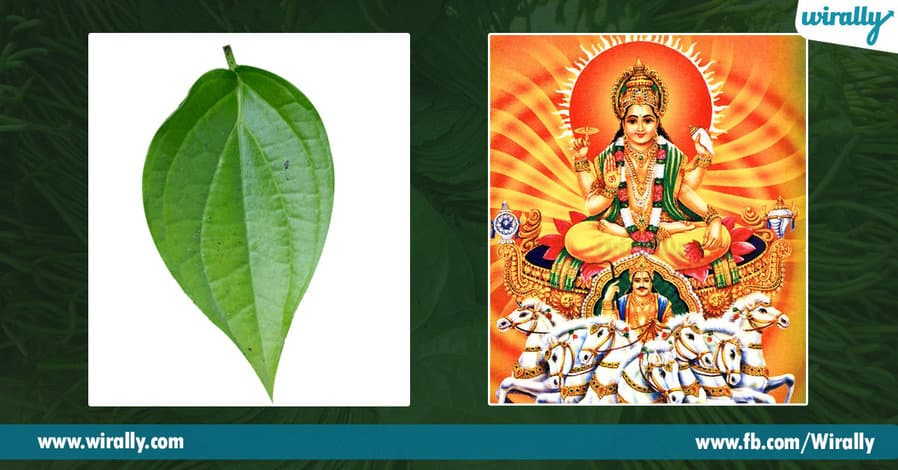 09 Importance of Betel Leaf