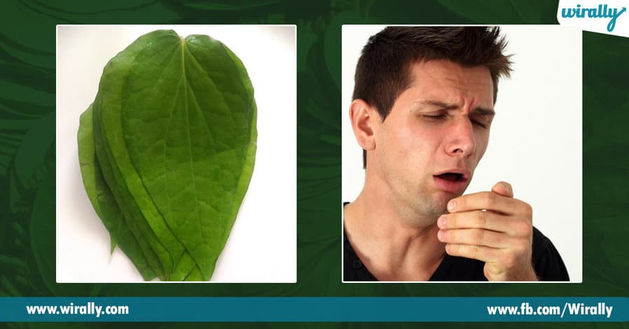 1 Health benefits of Betel Leaves
