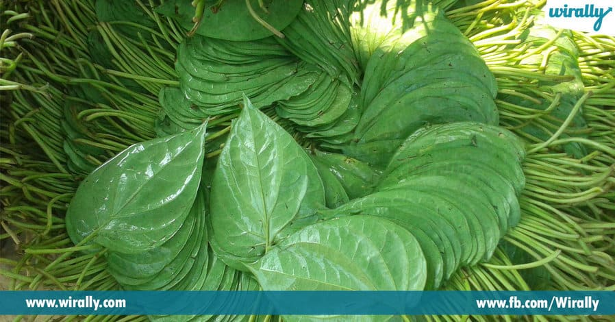 1 Importance of Betel Leaf
