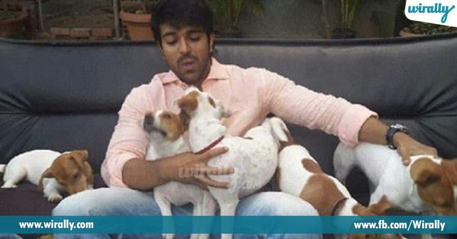 11 - Pet Lover