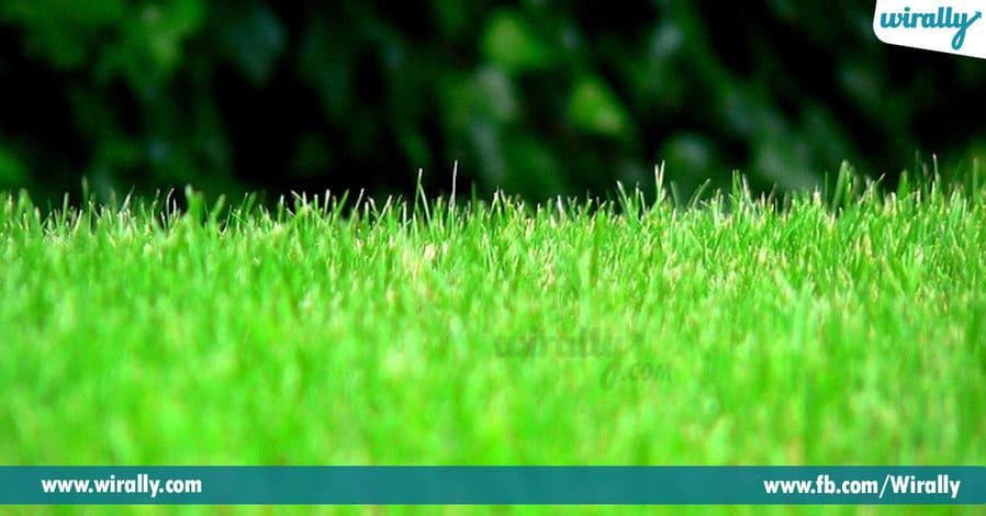 14 - Grass