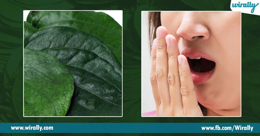 2 Health benefits of Betel Leaves