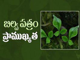 Food, Significance of Bilva Patram, Bilva Patram