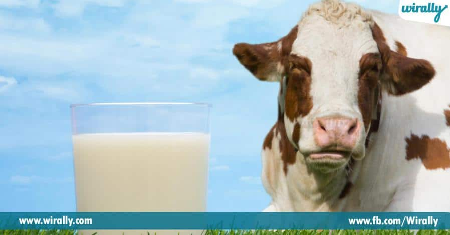 6 Cow milk vs Buffalo milk yedhi best