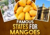 Famous Mangoes in India