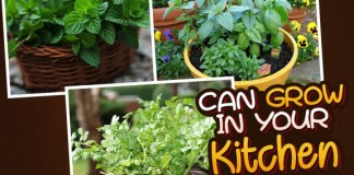 Herbs Which You Can Grow In Your Kitchen