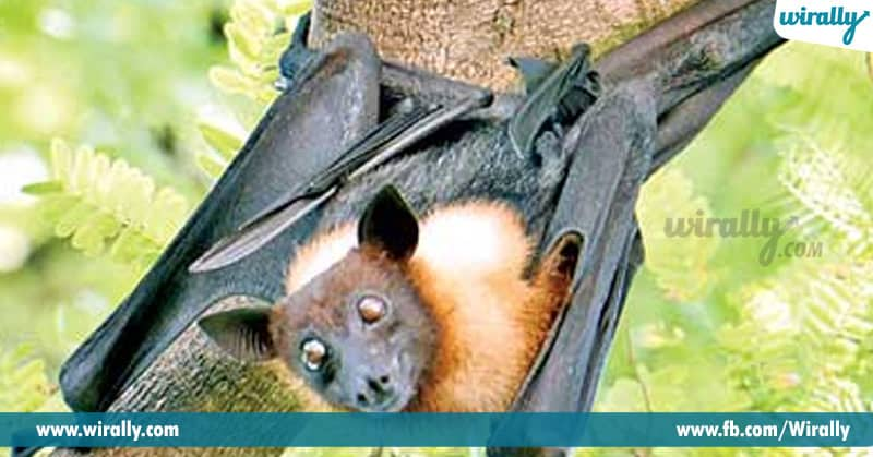 Bats Are Worshipped