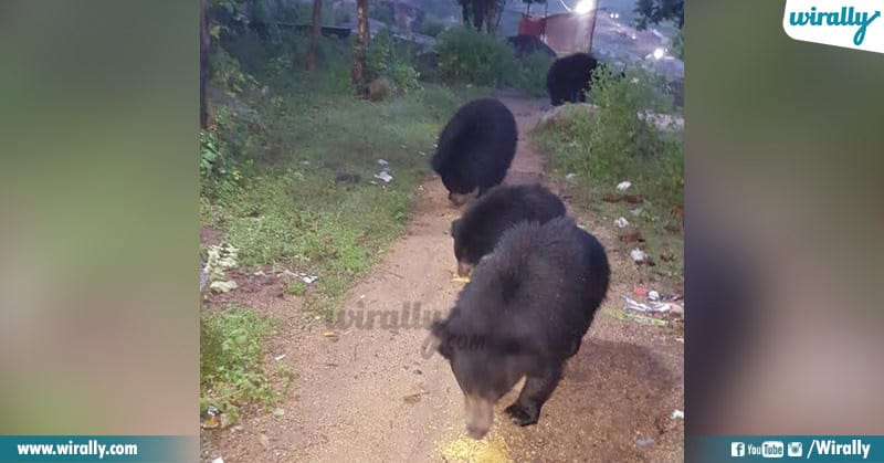 4 Bears Are Visiting This Temple