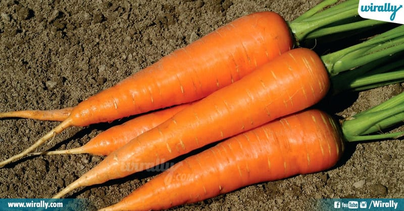 Carrot And Lead A Healthy