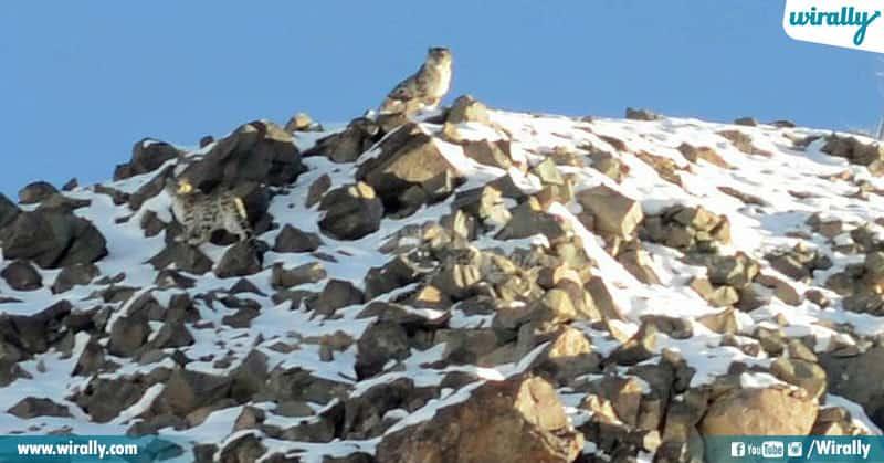 9-Snow leopard trek