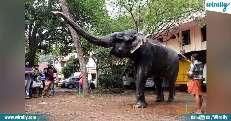 Dakshayani is oldest captive elephant