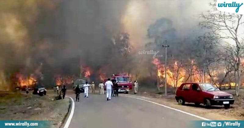 Bandipur Battle Wildfire's