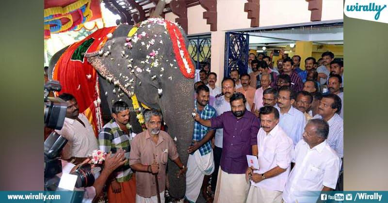 5 - dakshayani elephant