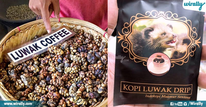 World's Costliest Coffee Beans
