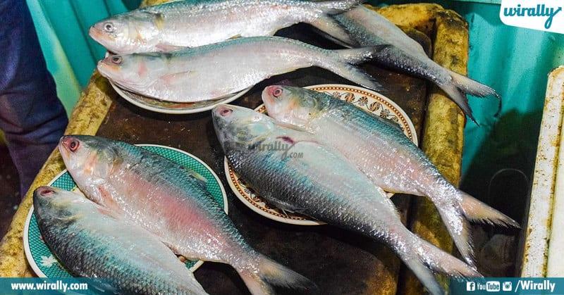 Pulasa Costliest Fish Of Andhra Pradesh