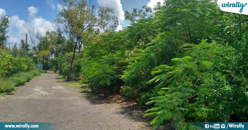 2-Rk nair tree