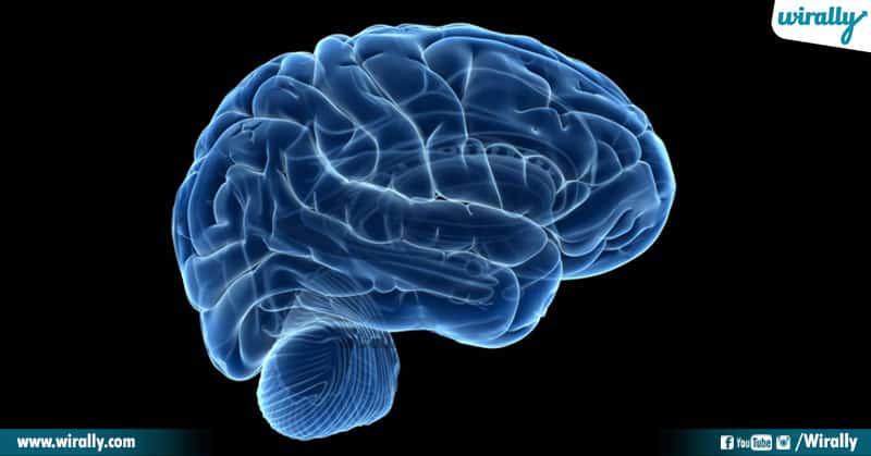 7-Brain