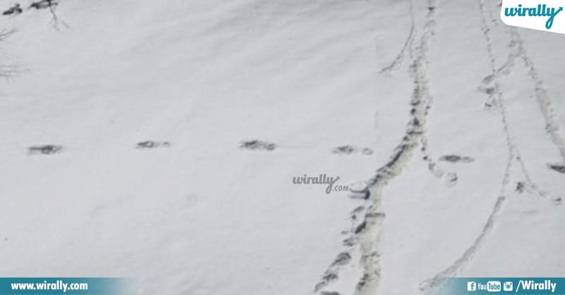 Mysterious Footprints Yeti