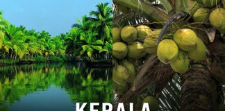 Kerala And Coconut