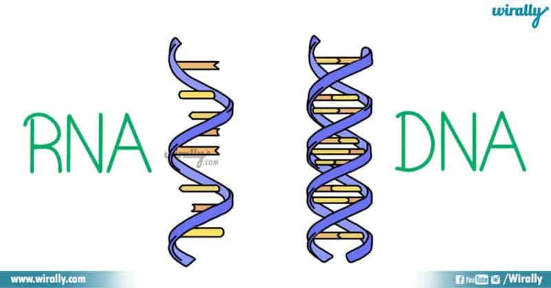 RNA - DNA