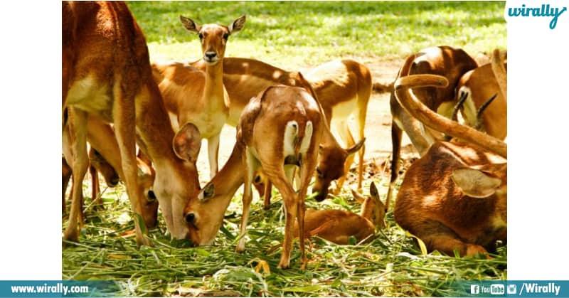 ali-sagar-deer-park